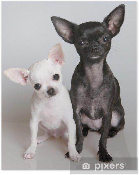 Poster Chihuahua - Thèmes