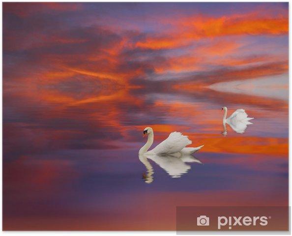 Poster Cisnes en el lago - Zwanen