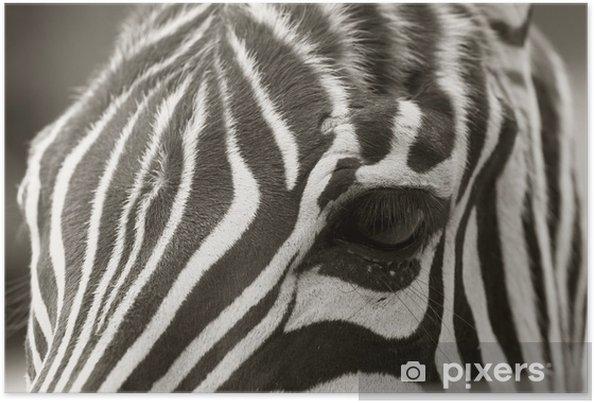 Póster Close up de una cabeza de cebra, mira sepia - Temas