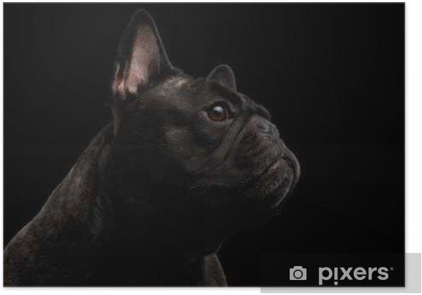 Poster Close-up française Chien Bulldog comme Monster in Vue de profil isolé - Animaux