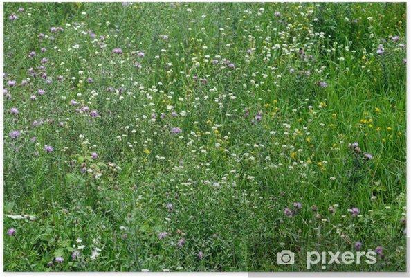 Poster Close-up Image de Spring Meadow avec herbe verte et le terrain Flowe - Saisons