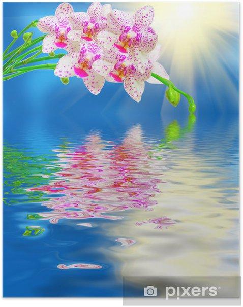 Poster Close-up van de orchidee bloem - Bloemen