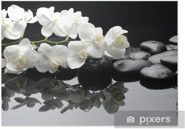 Close up white orchid with stone water drops Poster - Styles