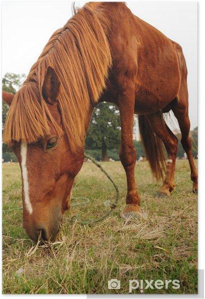 Closeup of a beautiful horse eating grass Poster - Mammals