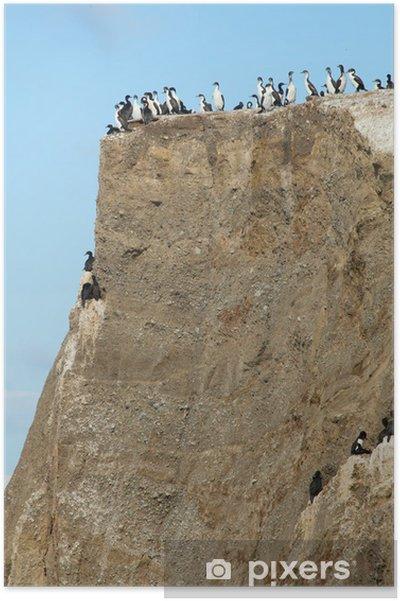 Poster Colonie de cormorans sur l'île Marta en Patagonie, au Chili - Amérique