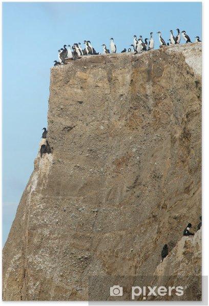 Colony of cormorants in the Marta island in Patagonia, Chile Poster - America