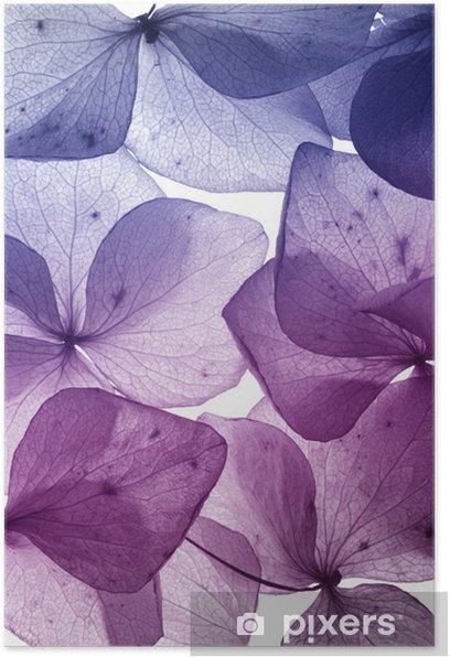 colorful flower petal closeup Poster - Themes
