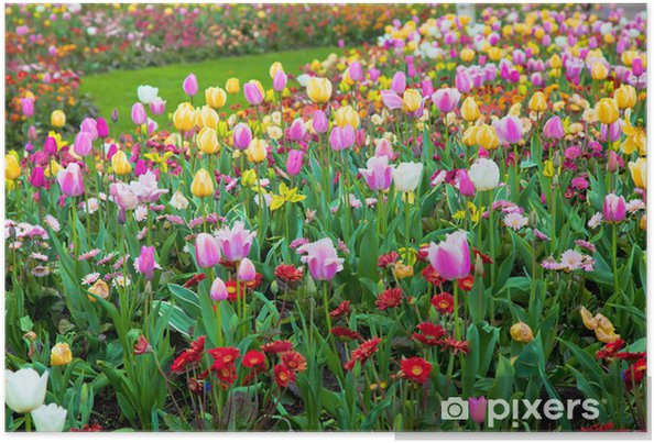 Colorful spring summer garden, flowers Poster