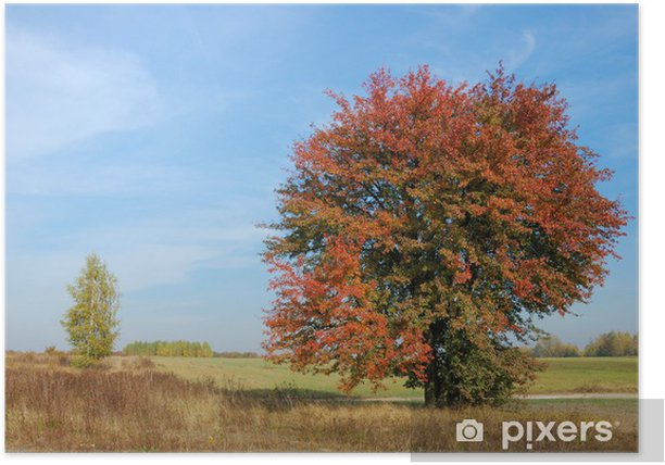colors of fall Poster - Countryside