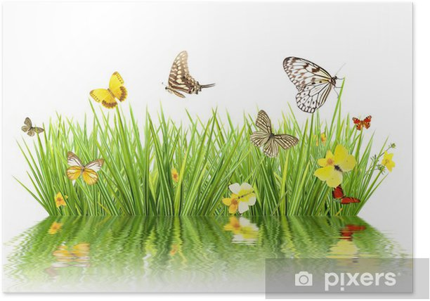 Concept of spring with meadow and water reflection Poster - Seasons