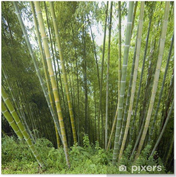 Poster Contexte en bambou - Europe
