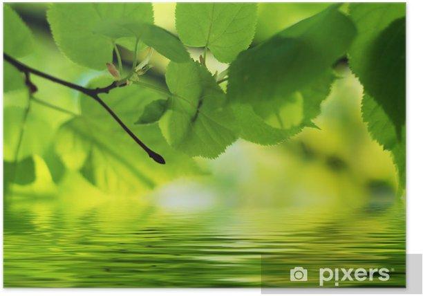 Poster Contexte naturel: tilleul laisse relflecting dans l'eau - Saisons