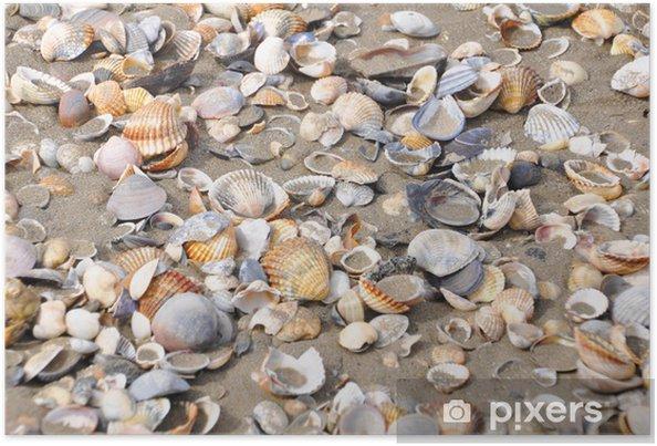Poster Coquillages sur la plage - Vacances