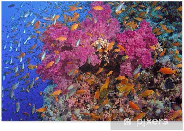 Coral reef Poster - Coral reef