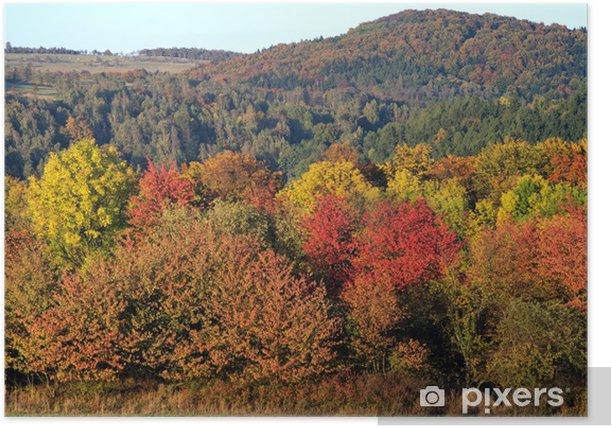 Poster Couleur vibrante forêt d'automne - Saisons