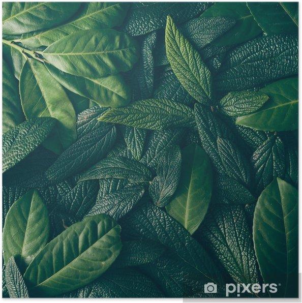 Poster Creatieve lay-out gemaakt van groene bladeren. plat leggen. natuur concept - Bloemen en Planten