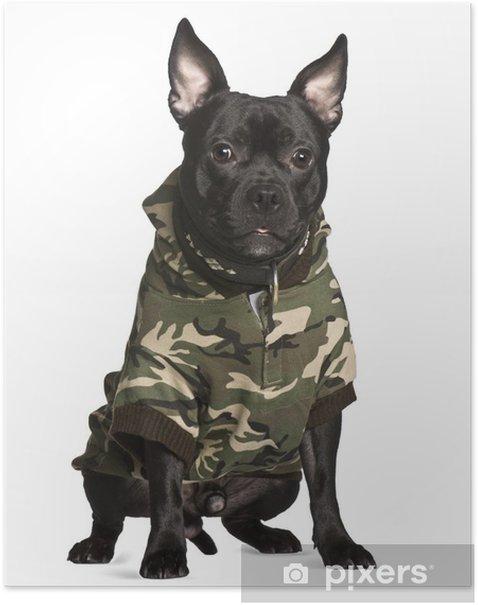Poster Croisement chien en tenue de camouflage, assis - Mammifères