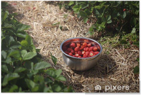 Poster Cueillir des fraises - Fruits