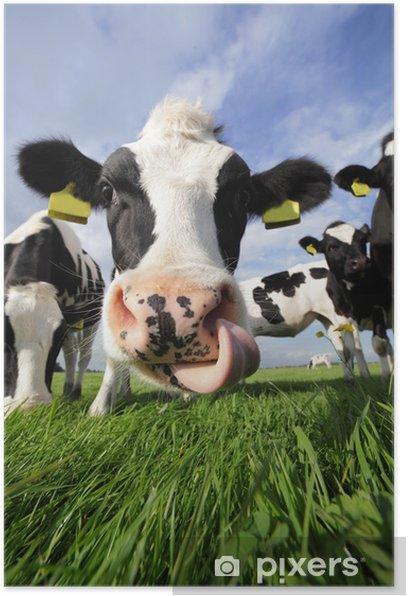 curious cow Poster - Mammals