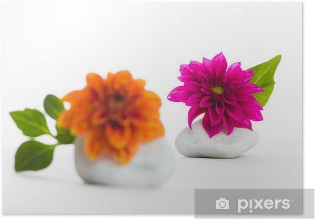 Dahlien auf Steinen Poster - Plants