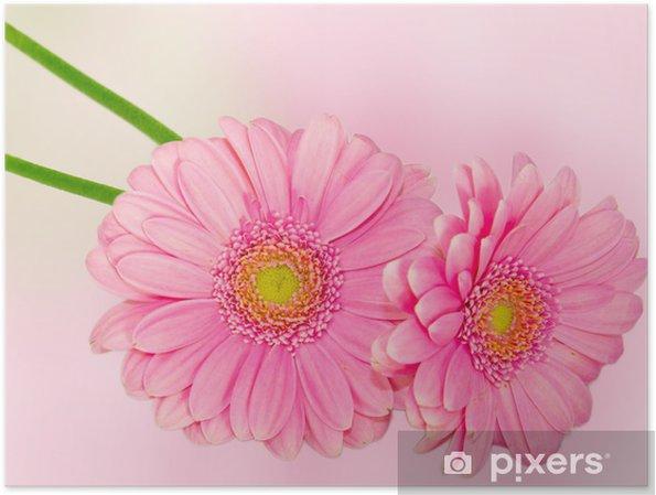 Poster Daisy flowers - Fleurs