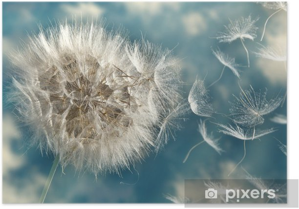 Dandelion Loosing Seeds in the Wind Poster - Themes