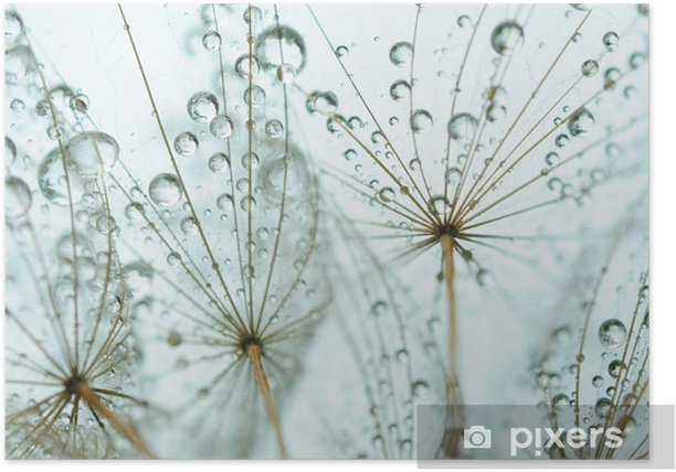 Dandelion seed with drops Poster -