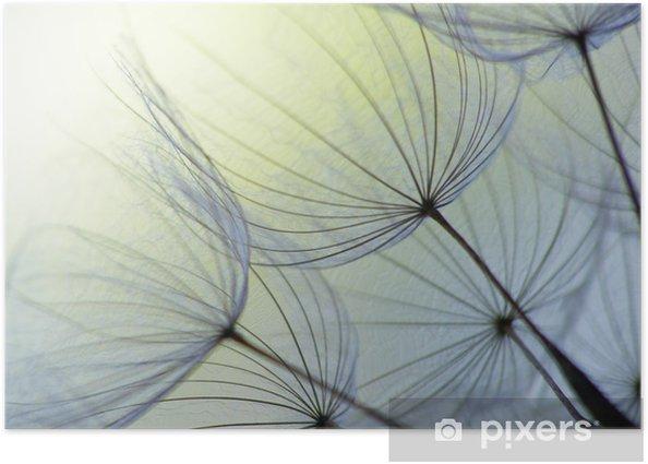 Dandelion seed Poster - Landscapes