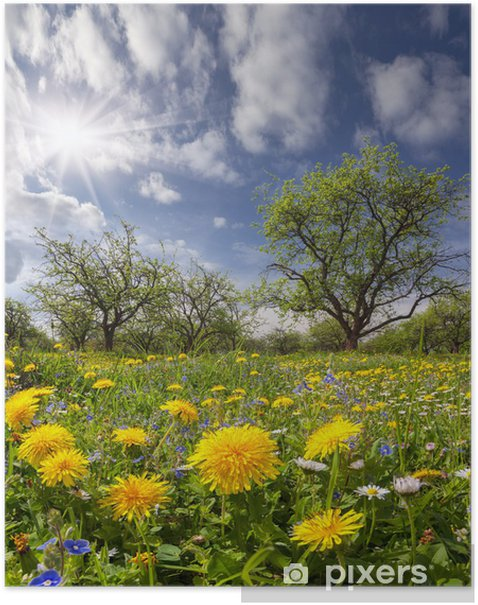 Dandelions on a green meadow in sunlight Poster - Themes