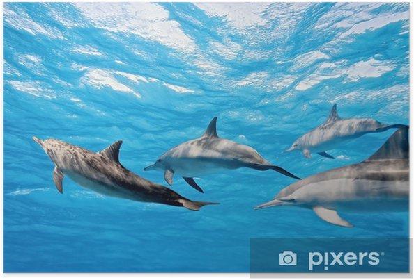 Poster Dauphins dans la mer - Thèmes