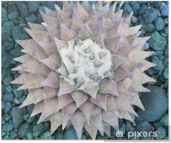 Poster De diamant oppervlak van de vijver - Bloemen en Planten