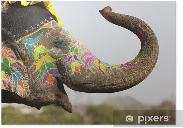 Decorated elephant at the elephant festival in Jaipur Poster - Asia