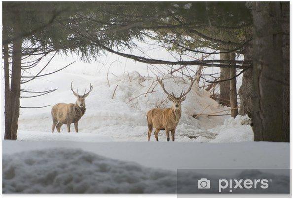 Poster Deer, isolé sur le fond blanc de la neige - Thèmes