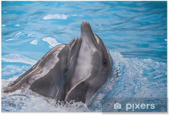 Póster Delfín - Temas