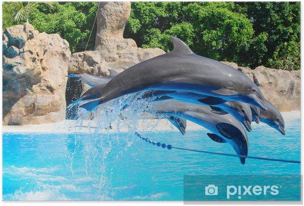 Poster Delfines - Thèmes