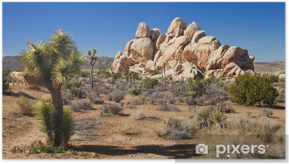 Poster Désert de Mojave Panorama - Désert