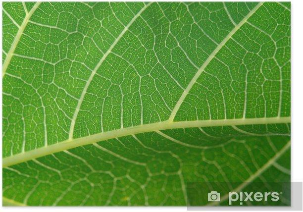 Poster Détail des feuilles - Plantes