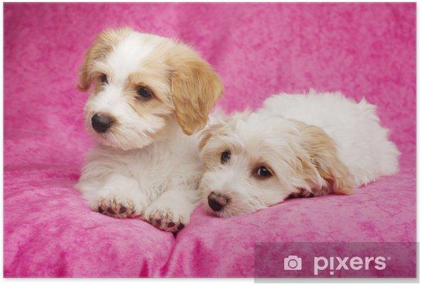 Poster Deux chiots posés sur un fond rose - Mammifères