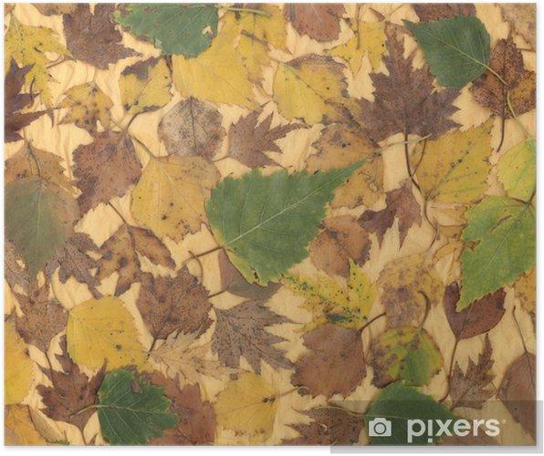 Poster Document d'information avec des feuilles d'automne - Saisons