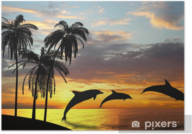 Dolphins near Hawaii Poster - Themes