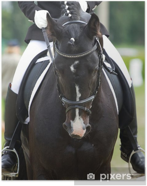 dressage horse and rider Poster - Individual Sports