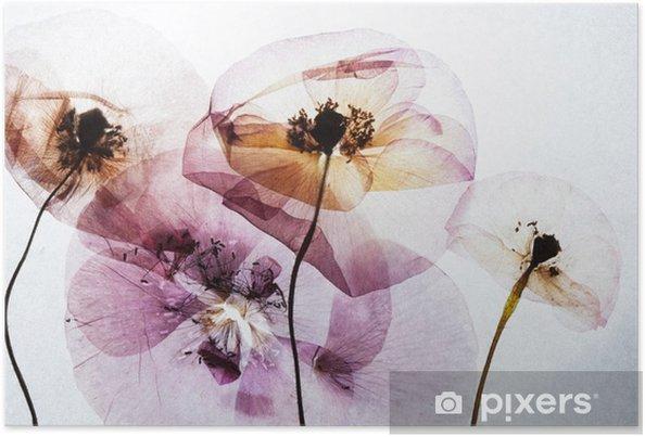 Poster Droge klaprozen - Bloemen en Planten