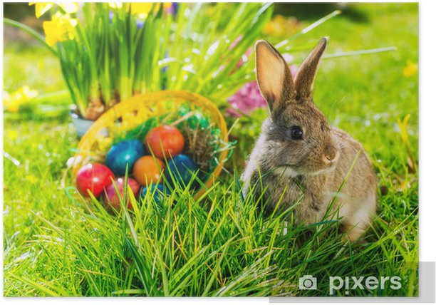 Easter bunny on meadow with basket and eggs Poster - International Celebrations