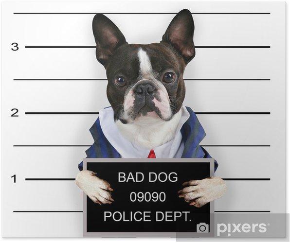 Poster Een mugshot van een slechte hond - Zoogdieren