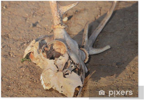 Póster El cráneo y la Sequía - Vida