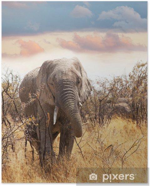 Póster Elefante - Mamíferos