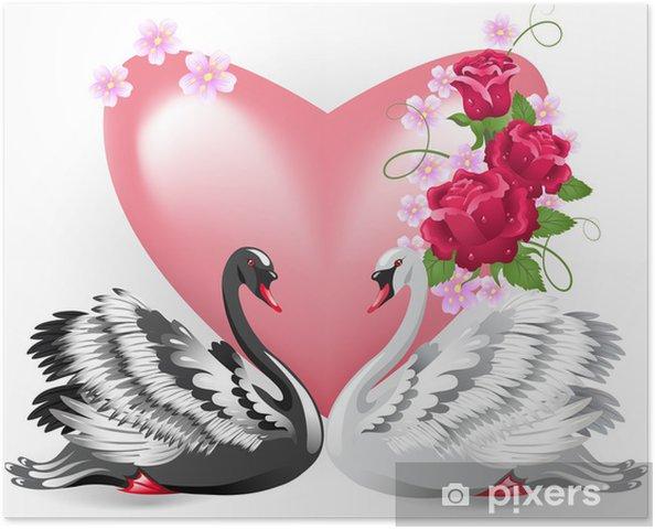 Poster Elegante witte en zwarte zwanen - Zwanen