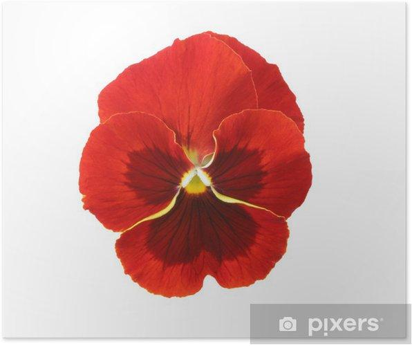 Poster Éléments de conception: Pensée rouge - Fleurs