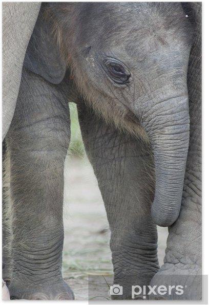 Poster Elephant baby - Thèmes