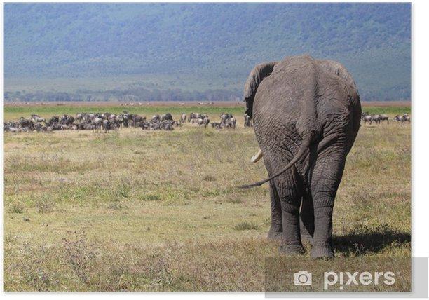 Poster Éléphant d'Afrique et troupeau de gnous - Thèmes